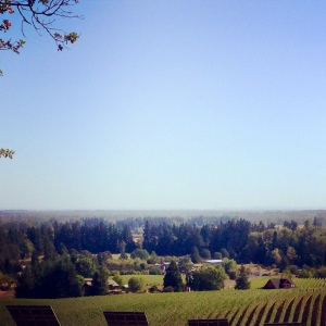 winery view